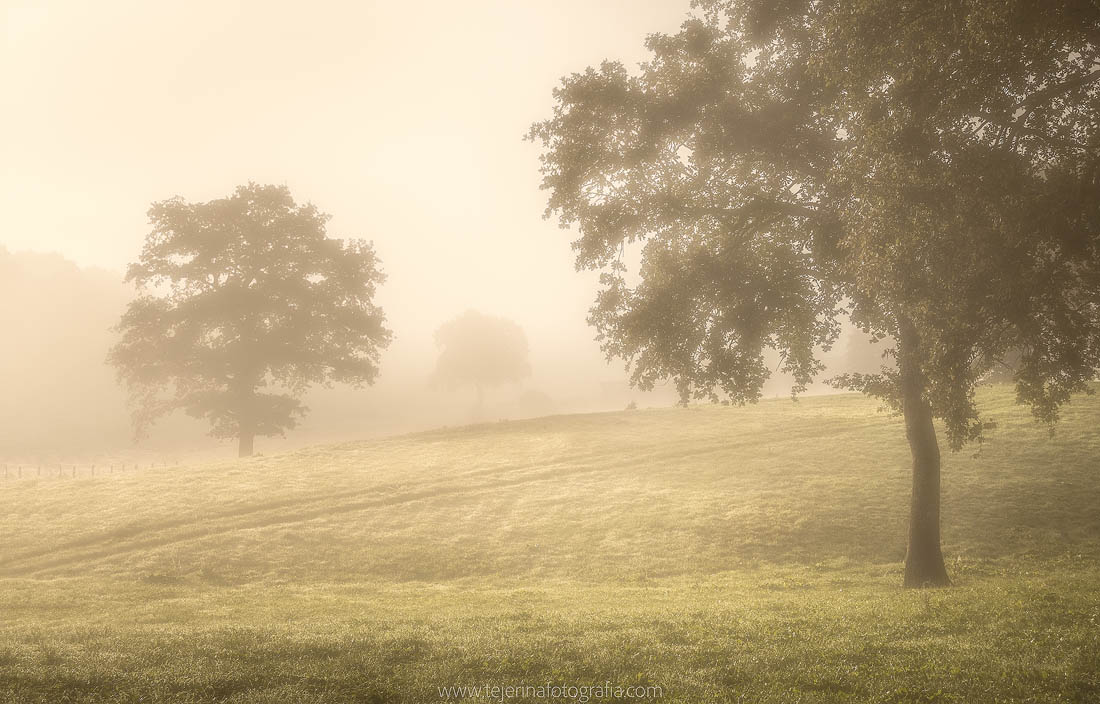 Niebla en Ultzama
