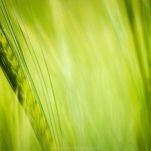 Verde en Ripodas